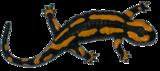 Inkleurbare vuursalamander_