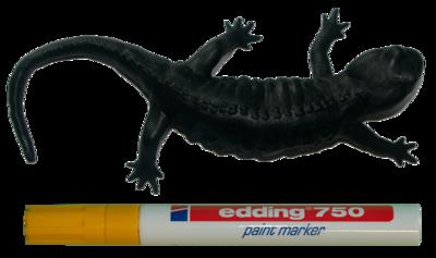 Nog in te kleuren vuursalamander